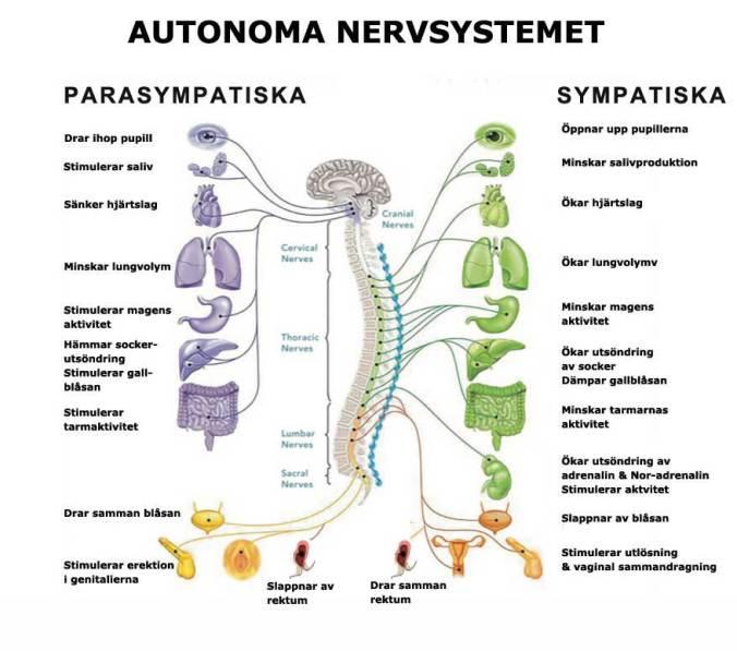 aut_nrvsy_web